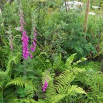 BOOK: The Garden Awakening – Designs to Nurture Our Land and Ourselves